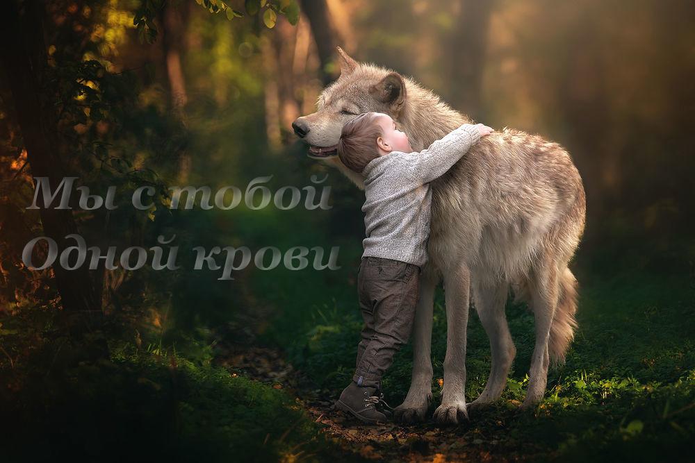 Блог собаки породы чехославацкий волчак
