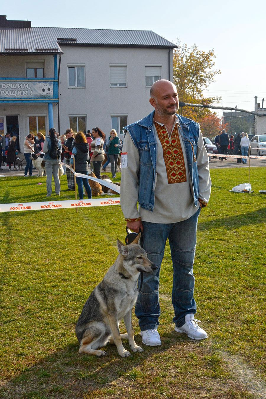 Волк на выставке собак