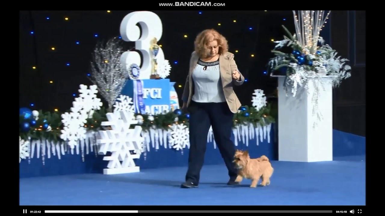 Первый выход на большую сцену. Конкурс Best puppy Київська Русь – 2018