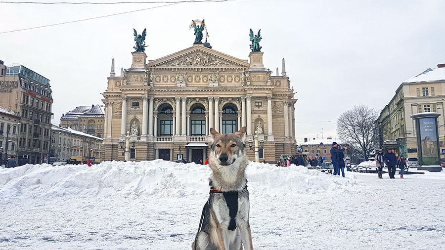 Академический театр оперы и балета в Львове