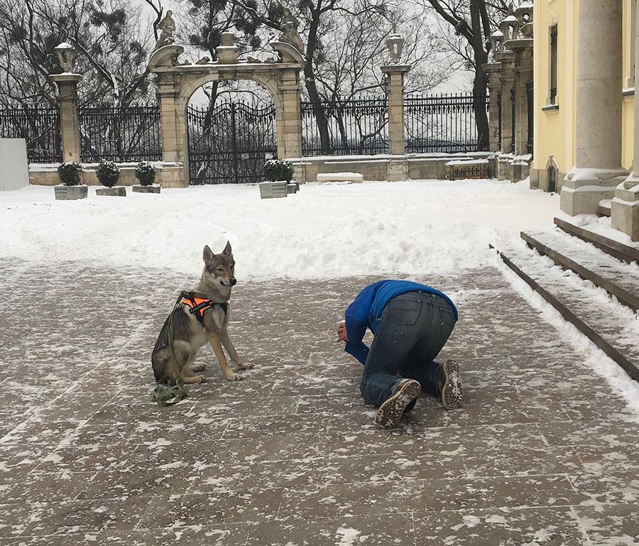 Как правильно фотографировать собак