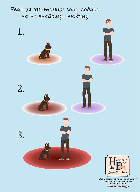 мир глазами человека и собаки