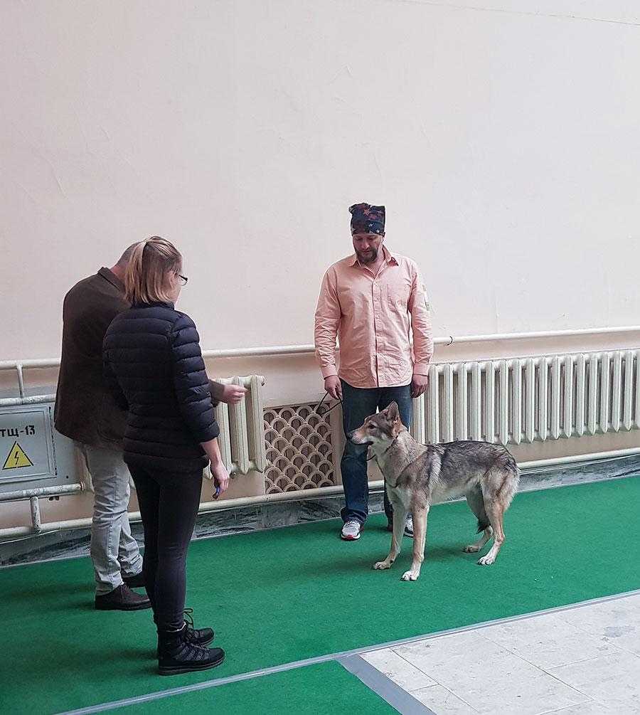Судья на выставке собак Özkanal, Dr. Ümit