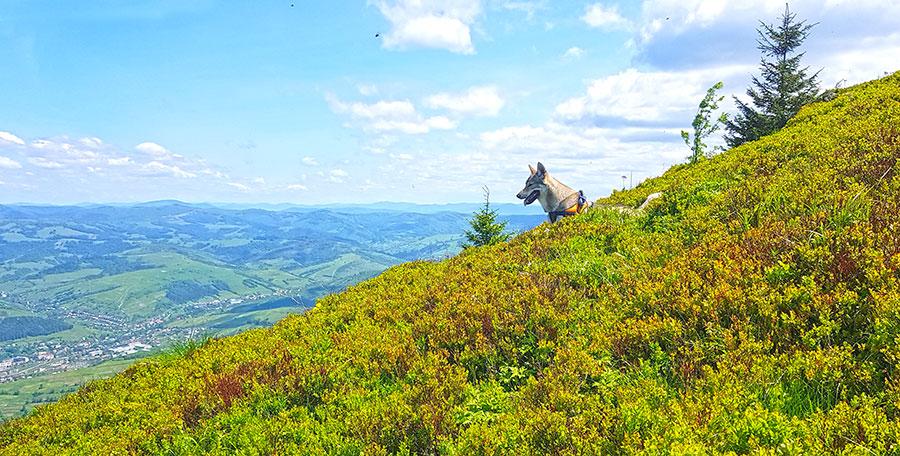 собака смотрит с горы