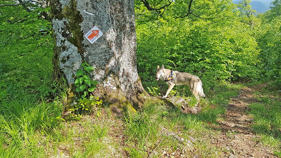 Старое дерево в лесу.