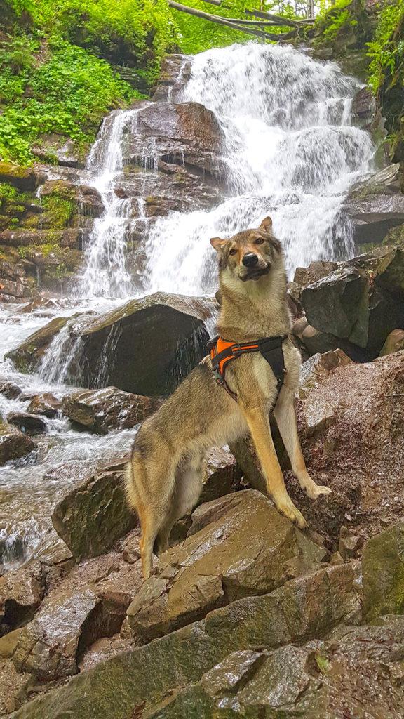 Волк на водопаде